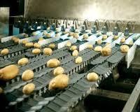 دستگاه سورت کن سیب زمینی