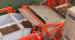خط تولید سورتینگ سیب زمینی
