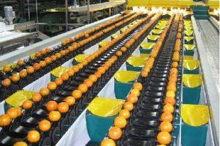 بزرگترین مرکز فروش دستگاه سورتینگ میوه